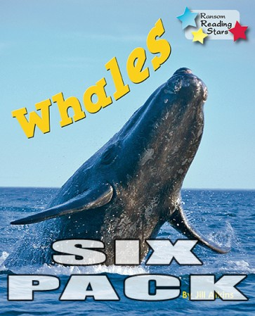 Whales (Pack 6)