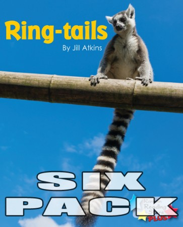 Ring-tails  (6 pack)