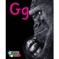 Alpha Stars Gg