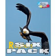 Raptors  (6 pack)