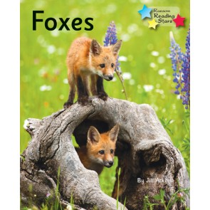 Foxes (Pack 6)